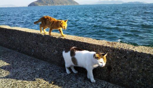 猫島(佐柳島さなぎじま)たくさんの猫に出会える楽園 香川県多度津町