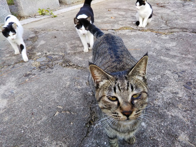 佐柳島 猫5
