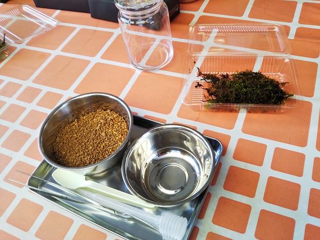 苔テラリウム作り体験3