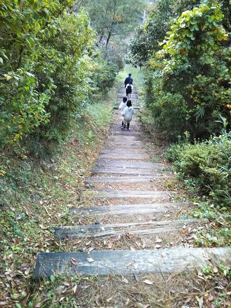 公渕森林公園 アスレチックまでのきゅうなかいだん