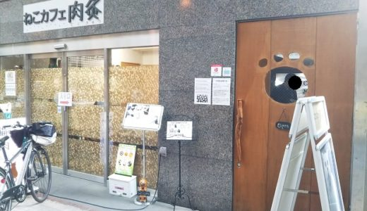 猫カフェ肉灸 高松市の猫がひざにのってきてくれる楽しい猫カフェ
