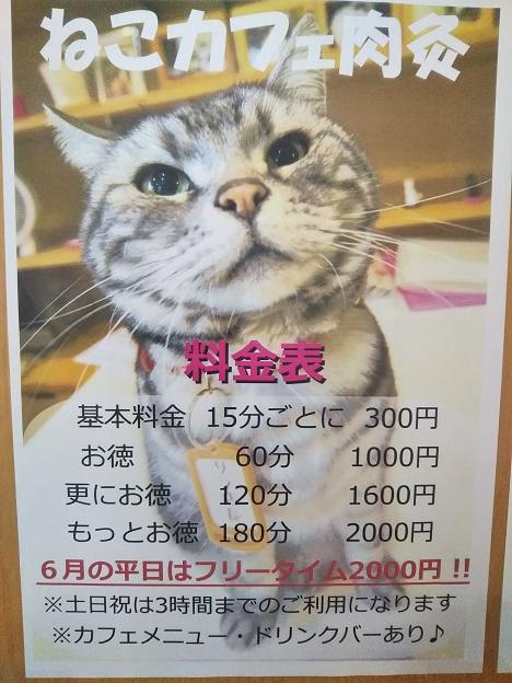 猫カフェ肉灸 料金