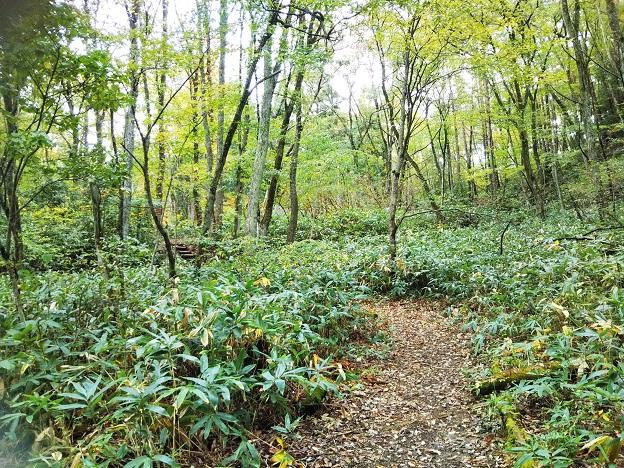 冒険の森でハイキングや森林浴
