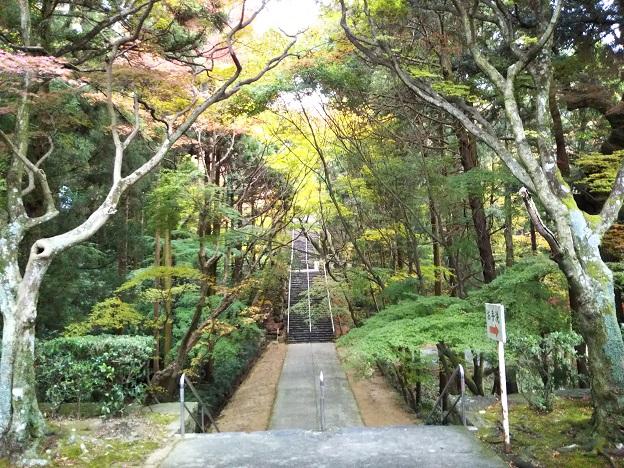 根来寺の木立