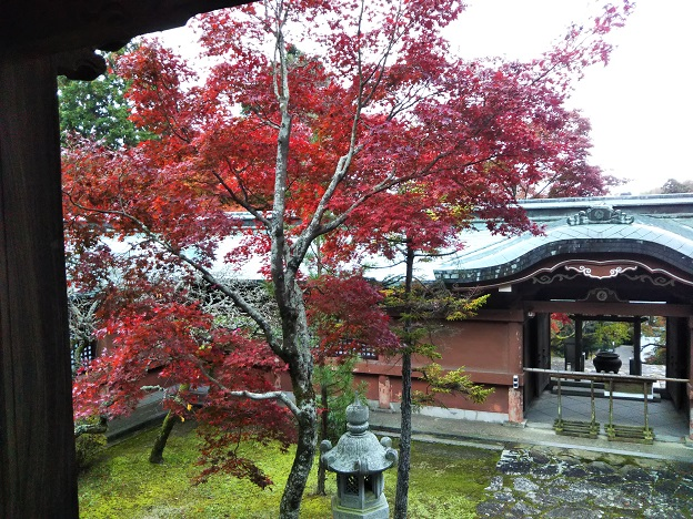 根香寺の本堂の紅葉