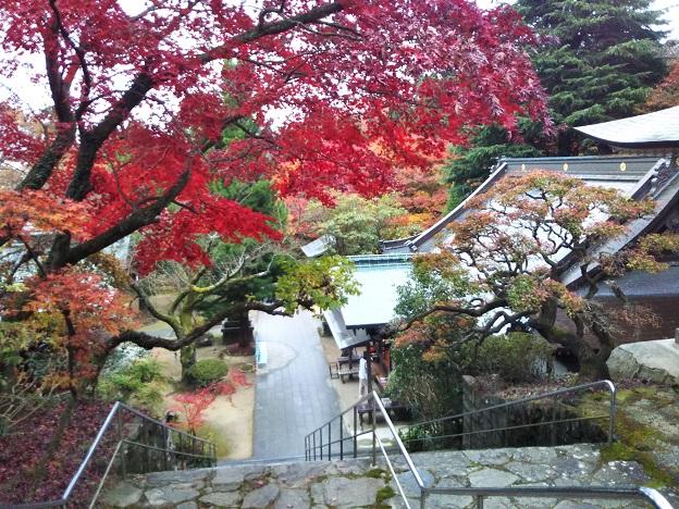 根来寺 紅葉が美しい
