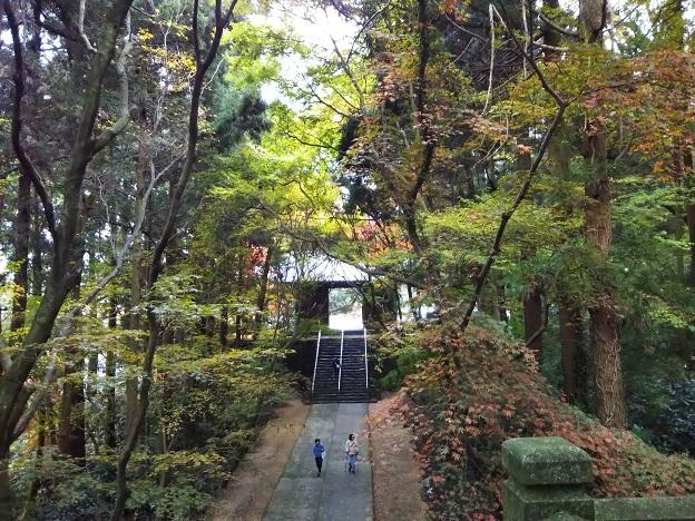 根香寺の山門付近の木々