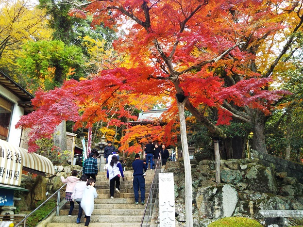 二天門の外側の紅葉