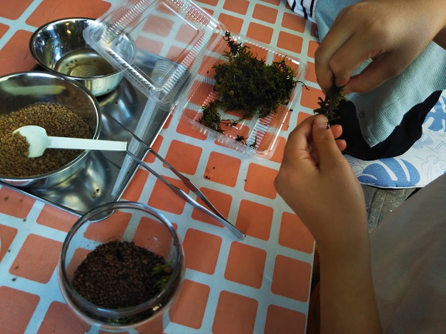 苔テラリウム作り体験 7