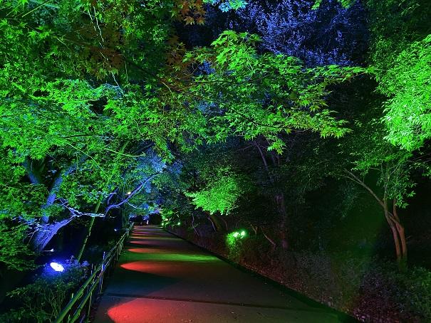 イルミネーション ライトアップ 香川県のおすすめスポット