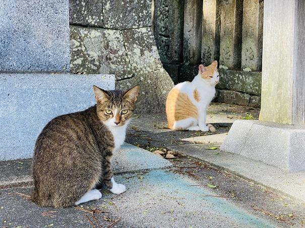 琴弾八幡宮下宮猫