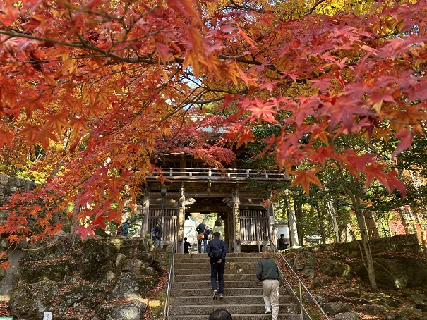 香川県 秋のおすすめ紅葉