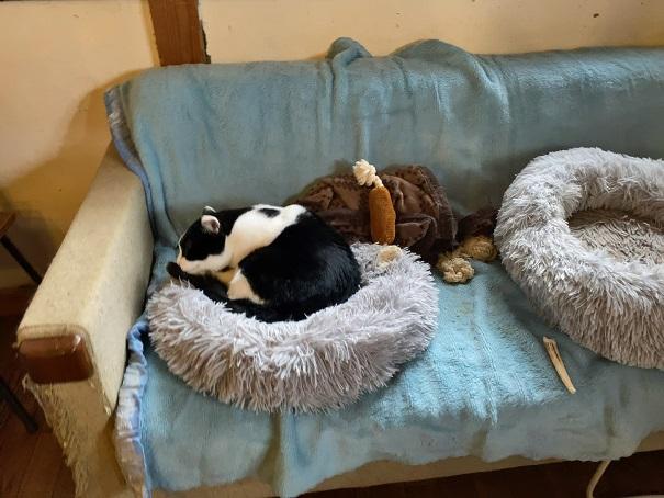 ヤマネコ手芸店保護猫