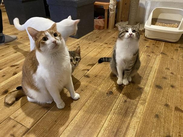 にゃんさとたくさんのネコ
