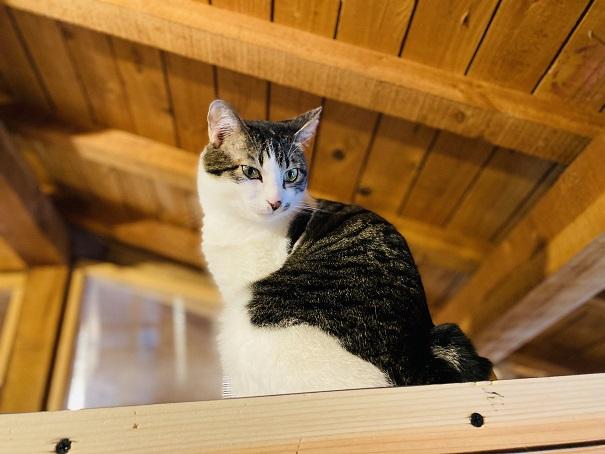 にゃんさと高いところにいる猫