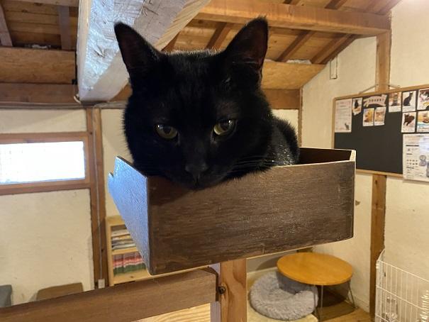 にゃんさと黒い猫