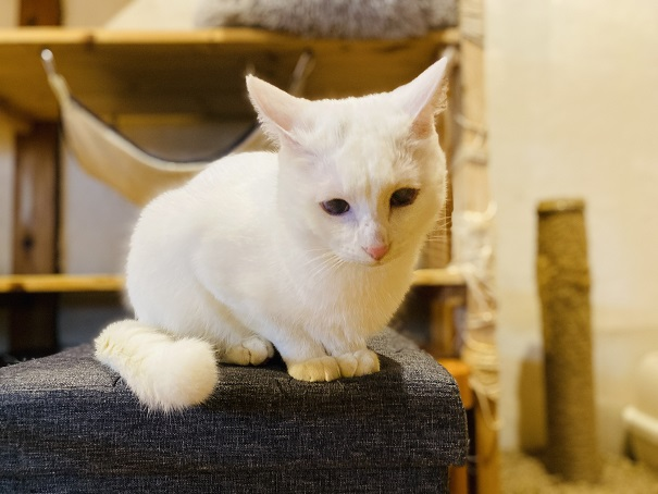 にゃんさと白いネコ