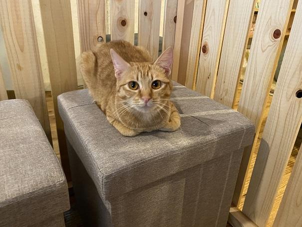 にゃんさとソファーの上のネコ