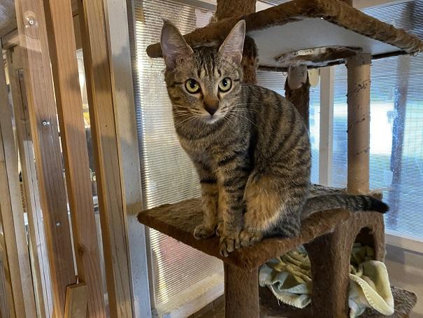 にゃんさと台の上のネコ