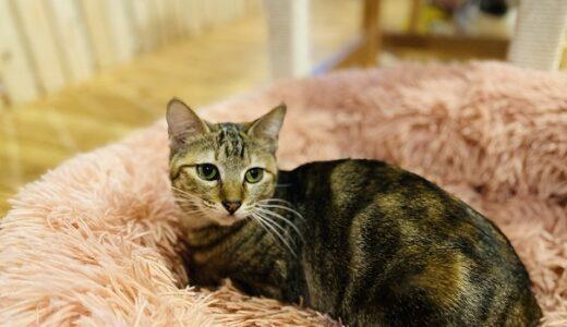 ヤマネコ手芸店2Fにゃんさと 保護猫シェルターで癒される 三豊市