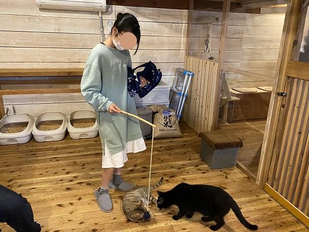 にゃんさと玩具で遊ぶネコ