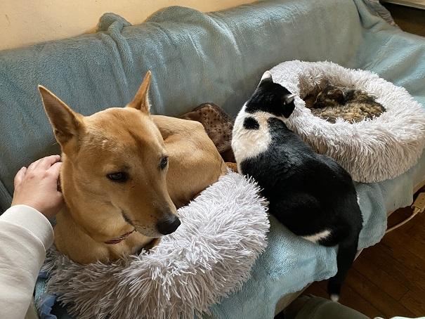 ヤマネコ手芸店保護犬