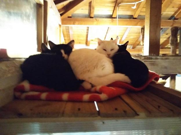 にゃんさと 猫2