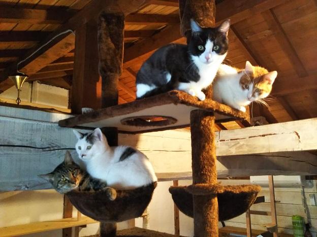 にゃんさと 猫3