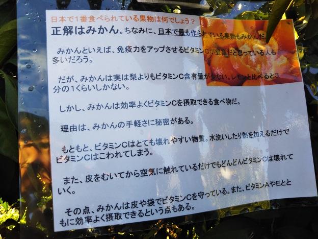 日本一食べられている果物はみかん