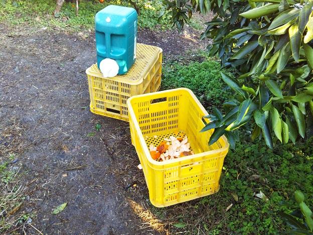 戸田果樹園のみかん狩り手洗いの水