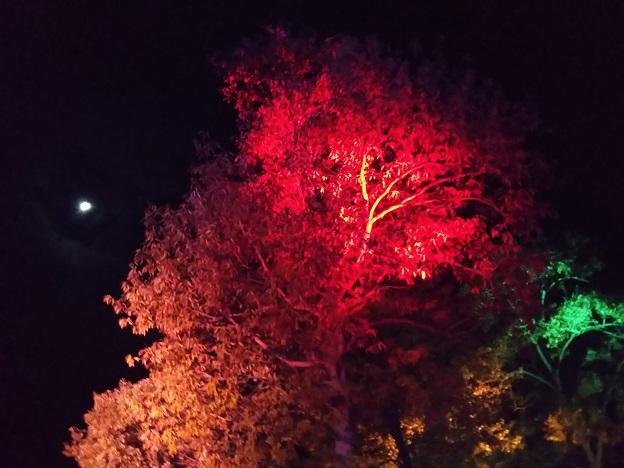 まんのう公園 紅葉イルミ