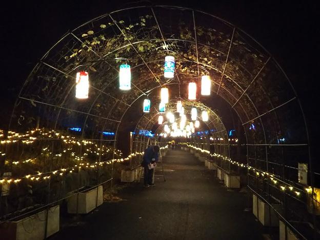 まんのう公園 光のトンネル