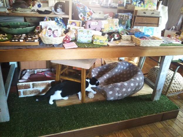 ヤマネコ手芸店 猫