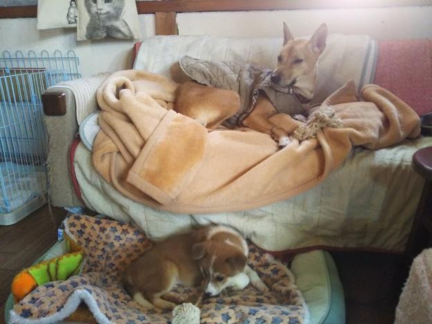 ヤマネコ手芸店 犬