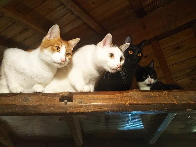 にゃんさと 猫5