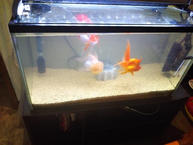 3番ラーメン 金魚