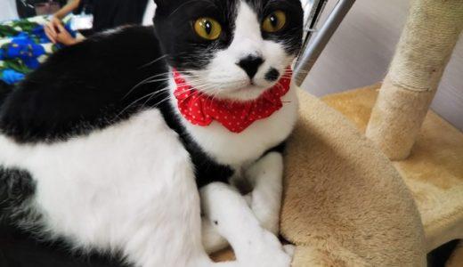 猫カフェ シピ(Chipie)でかわいい猫とふれあって癒される 高松市