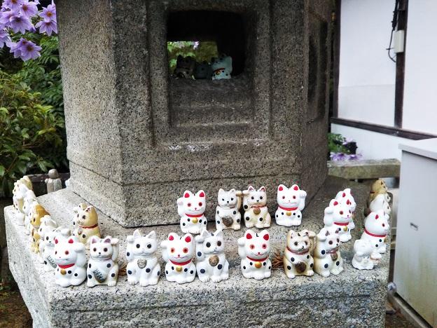 白峯寺の灯篭の招き猫