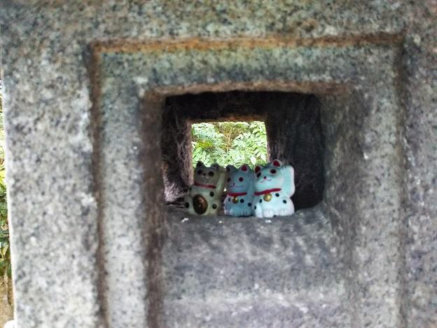 白峯寺の灯篭の中の招き猫