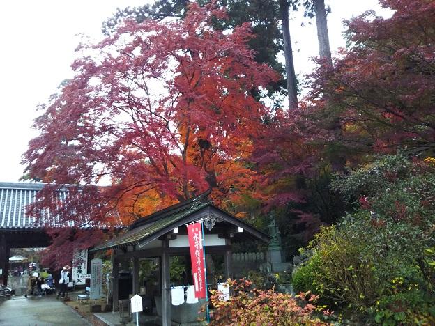 手水舎付近の紅葉