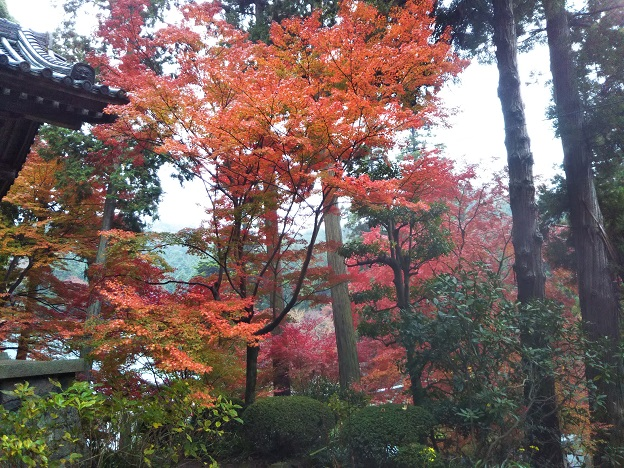 大日如来付近の紅葉
