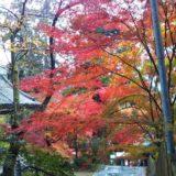 白峯寺虚空蔵菩薩付近の紅葉