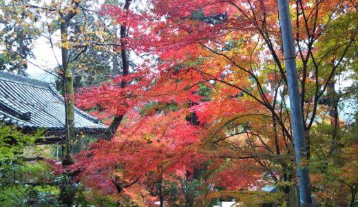 白峯寺は紅葉や桜や紫陽花がきれいなインスタ映えスポット 初詣も賑わう坂出市のお寺