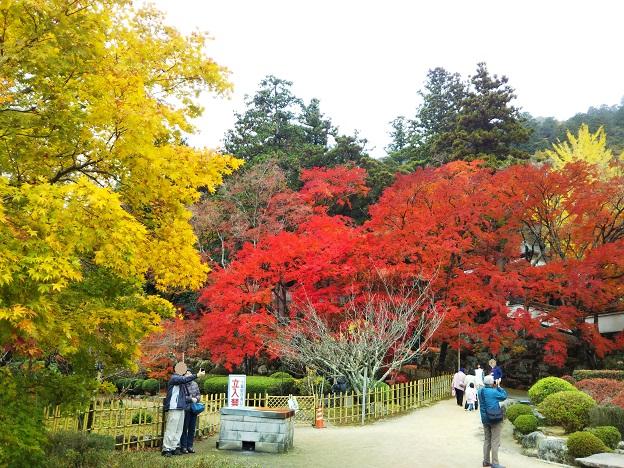 香川県の秋の紅葉