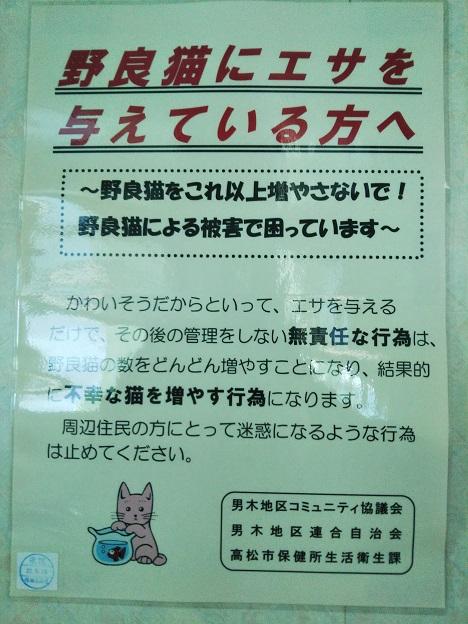男木島 猫にエサはダメ