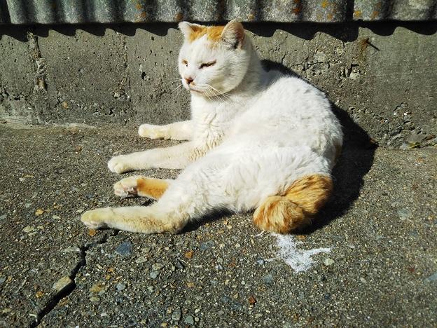男木島 猫2