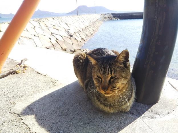 男木島 猫3
