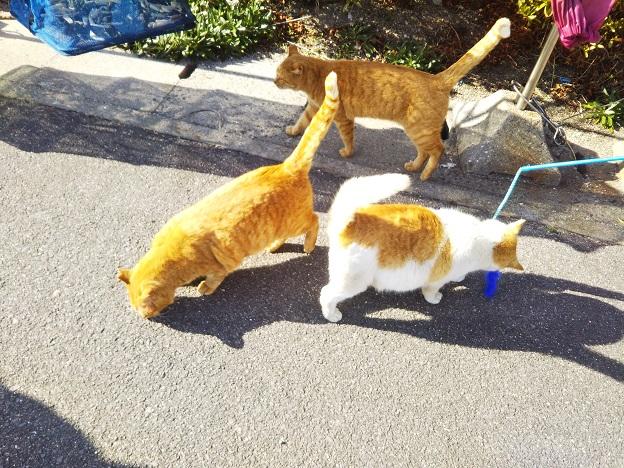 男木島 猫7