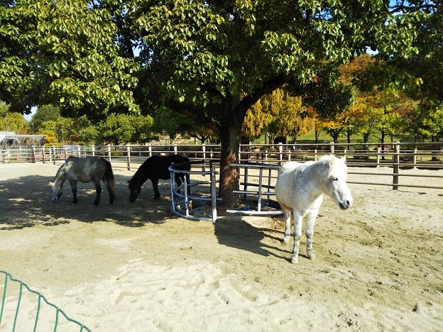 第1放牧場で馬を見る