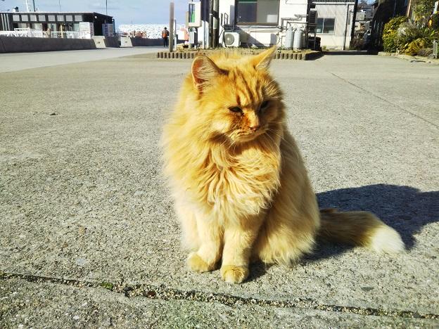 男木島 猫11